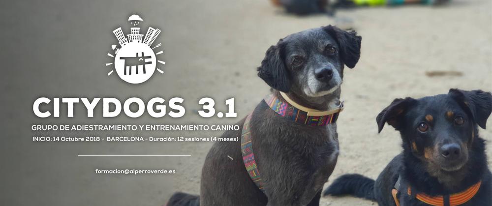 """Cabecera curso """"City Dogs"""""""